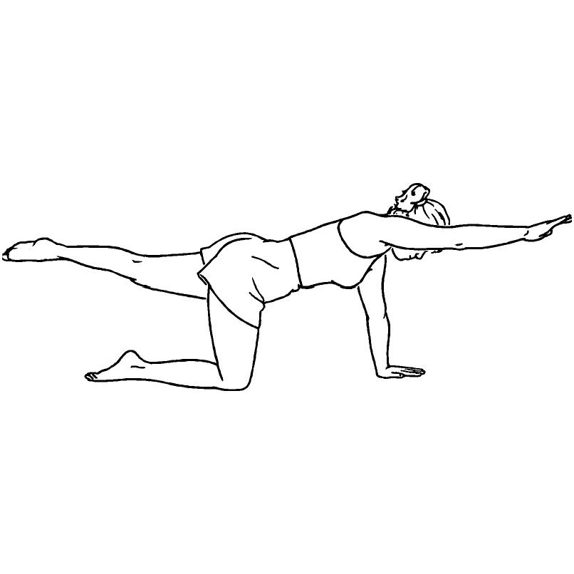 Quadruped Stretch Arm / Leg Exten...