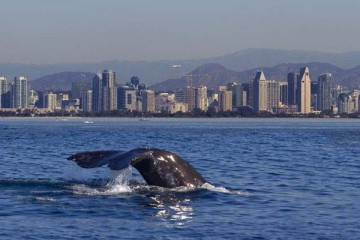 Whale seen off the coast