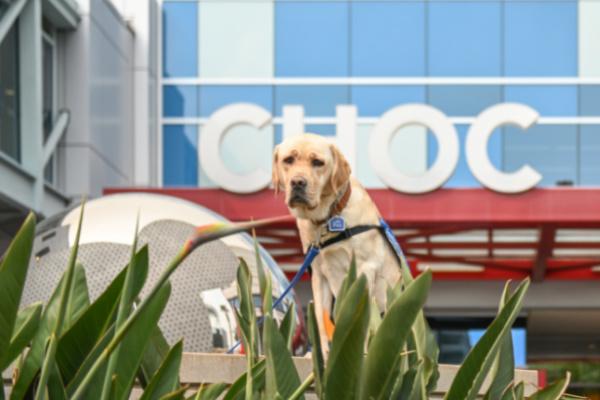 CHOC resident dog Lois outside CHOC Hospital